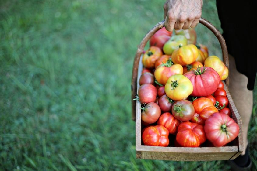 5 Reasons to Grow Your Own Organic Produce